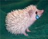 paraplegichedgehog Avatar