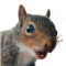 PFSquirrel Avatar