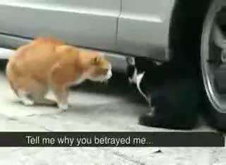 Cat fight. .. pussy.
