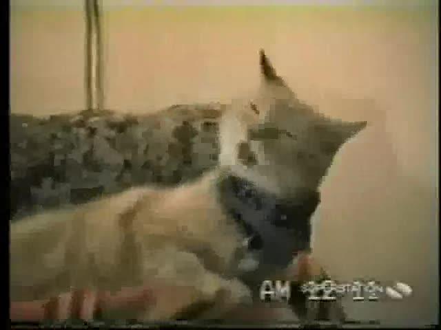 bob segar kitteh. www.lulzpitbullz.org we never loved u yet? luluq this vids 4 you god told me to do it... blew my mind