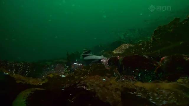 Sea fortress. original youtube video: www.youtube.com/watch?v=NMDVKXYh76s.. MFW Spycrab mating season.