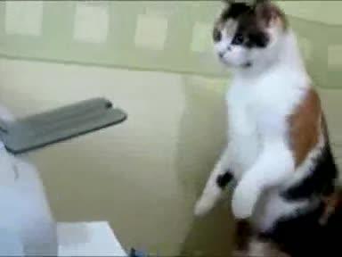 Cat vs. Printer. .