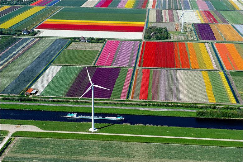 A Majestic Tulip Farm in Netherlands. . A Majestic Tulip Farm in Netherlands