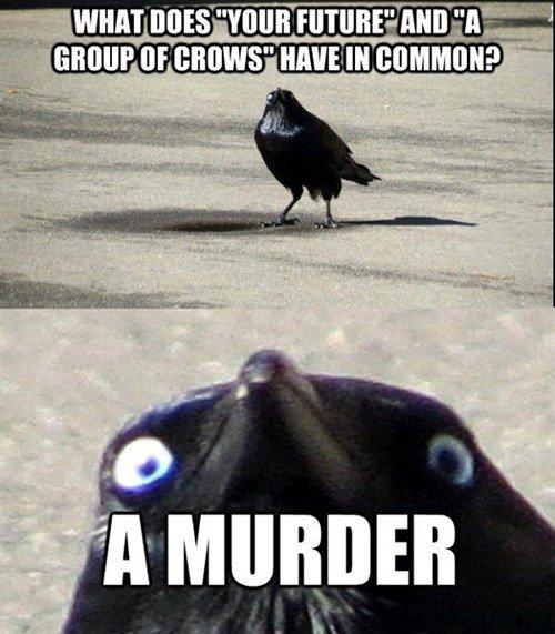 A Murder. . brad