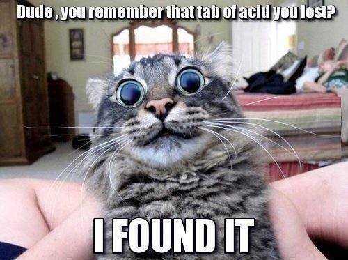 Acid Cat. . Acid Cat