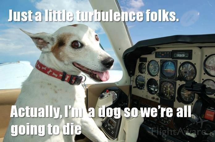 Actually im a dog........... lol. llg! it. k t Bills n. ISI Actually im a dog lol llg! it k t Bills n ISI