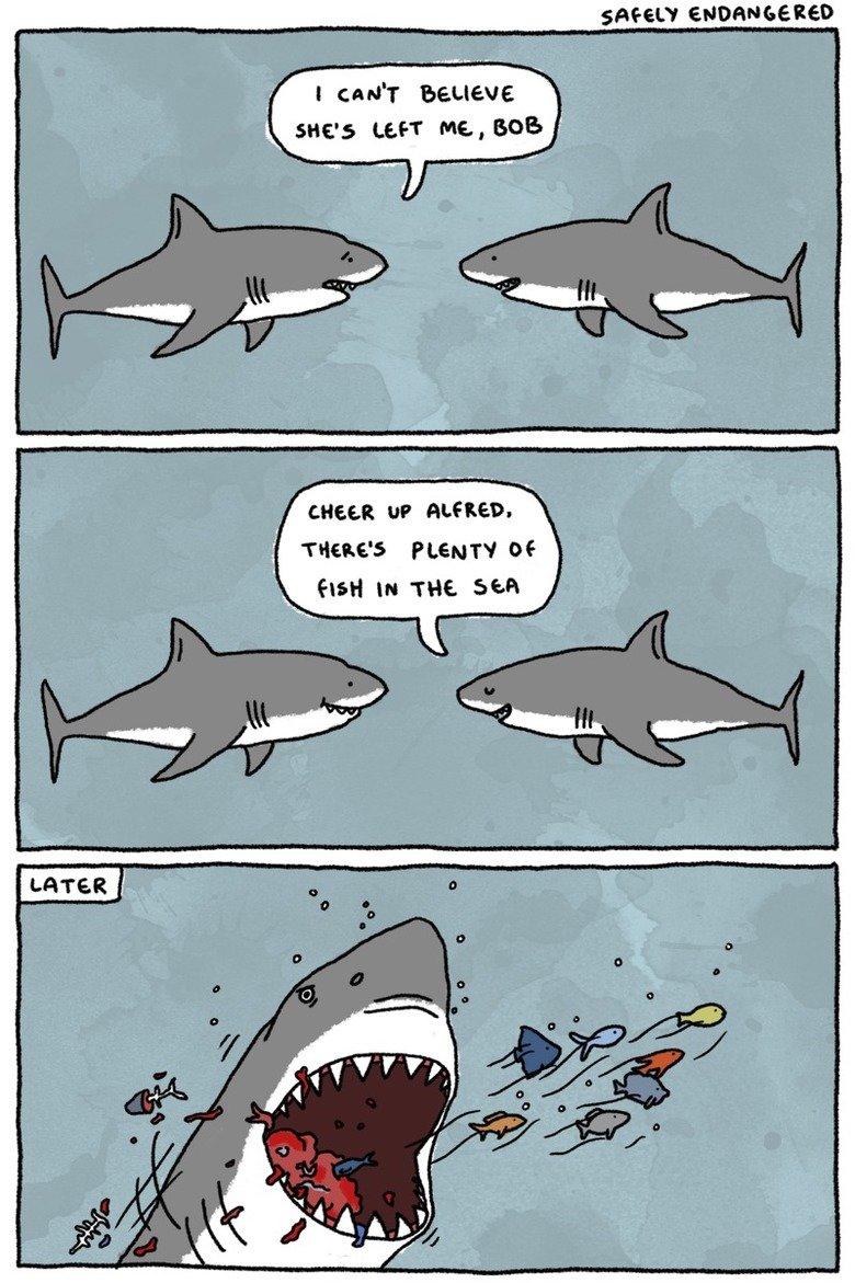 Alfred the Shark. . alfred Shark