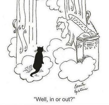All cats go to heaven. . All cats go to heaven