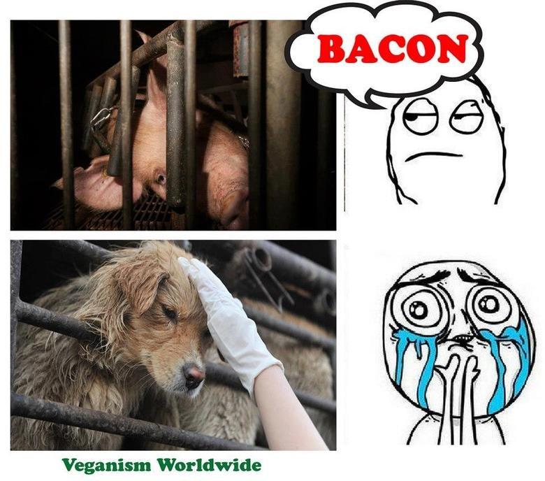 America. Google 'Farm to Fridge'.. Veganism Worldwide. hähä no double standart Bacon moral schizophre vegan Meat pig pork factory farming Dogs