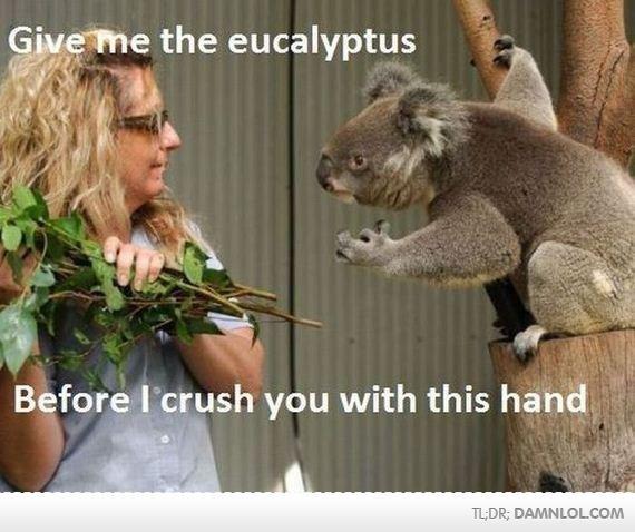 Angry Koala is Angry. A hungry koala is an angry Koala. Angry Koala is A hungry koala an angry