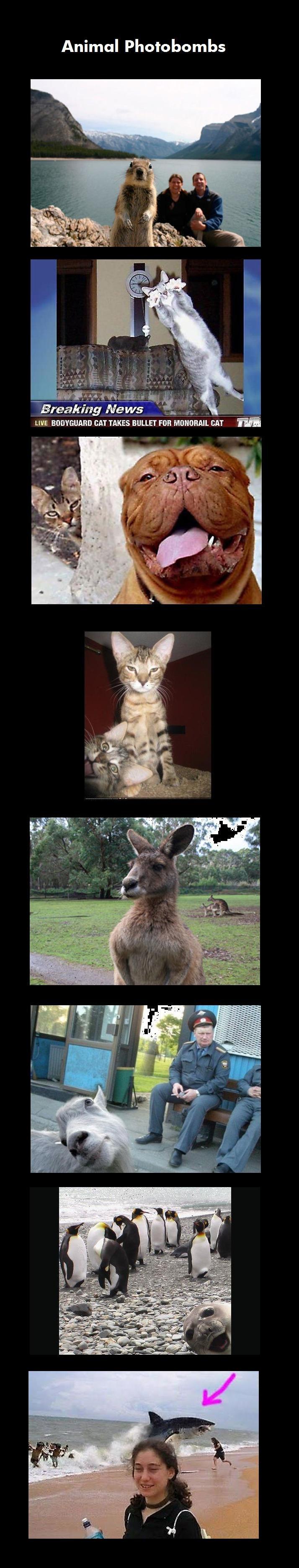 Animal Photobombs. . Animal Photobombs Breaking News _ _:Cr N, LIVE BAT TAKES BULLET rim MOMMIE BM' E Animals photobomb