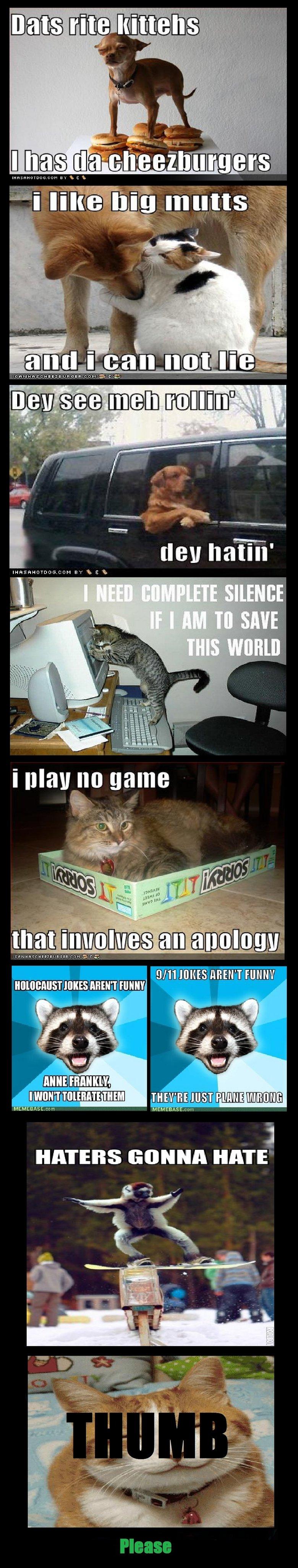 Animal humor comp. enjoy. MEMEBASE. cnm HINDI]! HATE animal humor comp im doin your Mom funny cat Dog Raccoon haers