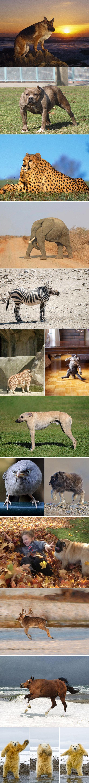ANIMALS WITHOUT NECKS!!!. .. you forgot one ANIMALS WITHOUT NECKS!!! you forgot one