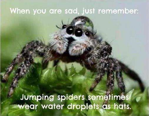 Aquatic Headgear. spider bro has style. Aquatic Headgear spider bro has style