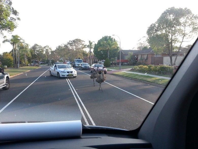 Australian Hot Pursuit. Amazing police chase caught on camera. eMU