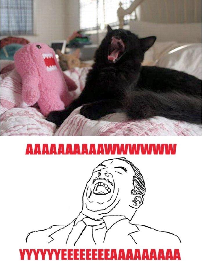 Awww yeaaaa kitten. Saw this kitten and im like AWWW YEA. awww yea Kitten funny lol