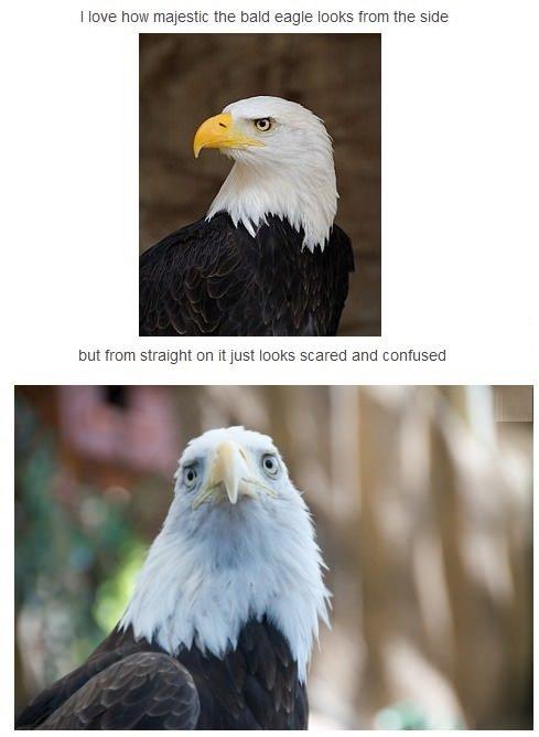 "Eagles. . I love how the bald eagle ti% agil '"" d, side E: tuturu:: straight on itjust lama ific. "" and "". This one looks pretty bad ass Eagles I love how the bald eagle ti% agil '"" d side E: tuturu:: straight on itjust lama ific "" and This one looks pretty bad ass"