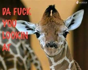 Effin' Giraffe. . Effin' Giraffe
