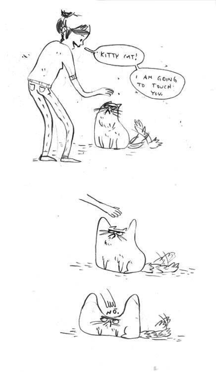 El gato es no bueno. . El gato es no bueno