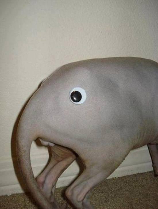 Elephant. What a majestic creature.. ballsack dry Balls