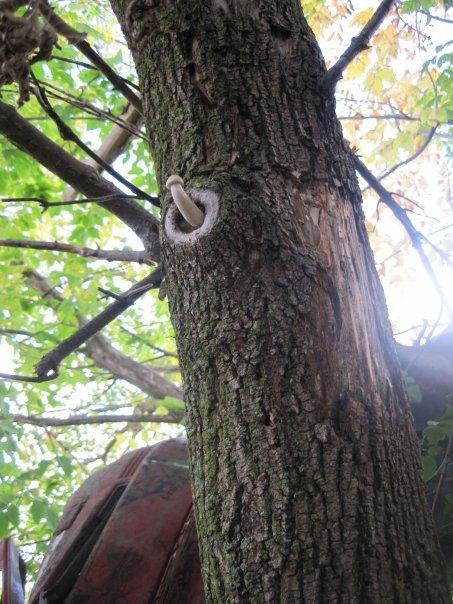 eltiT. You would climb that tree.... Penis Tree