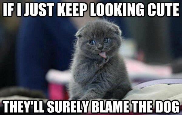 evil cat lol. . If I HIST KEEP CUTE evil cat lol If I HIST KEEP CUTE