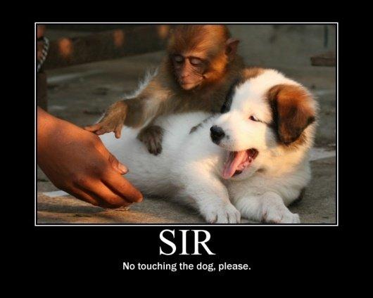 Excuse Me No Touching. Hi. monkey Dog funny bored