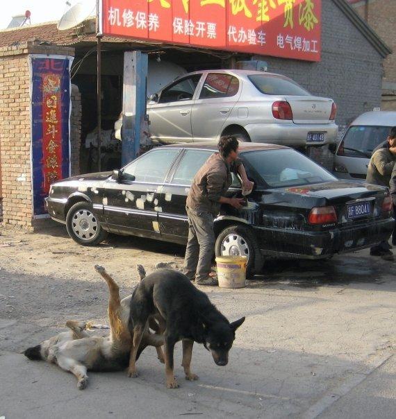 extreme doggy style. AWWWWWWWWWWWWWWWW YEEEEEEEEEEAAAAAAAAAAHHHHHHHHHHHHHHHHHHH H.. uhhh im pretty sure they're stickers... u Mad kama sutra