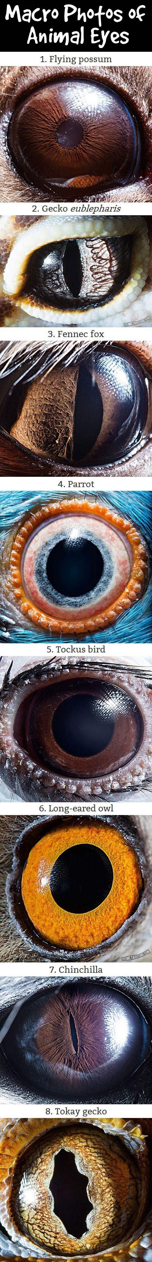 eyes. . eyes
