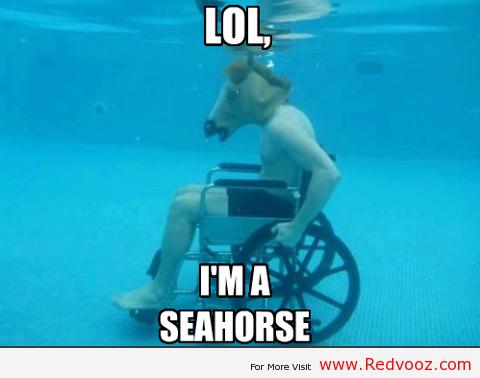 I am a Sea horse. I am a Sea horse. I am a Sea horse