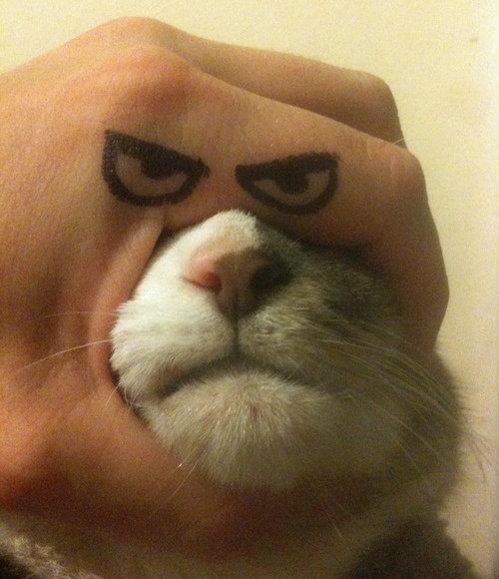 I am cat, fuck you. .. Fixed I am cat fuck you Fixed