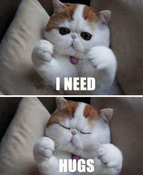 I couldn't resist. Description. Cat cute hugs