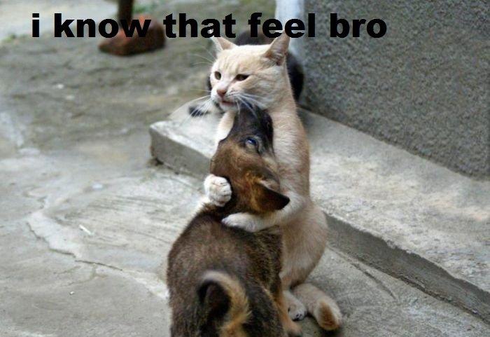 i know that feel bro. i know that feel bro. i know that feel bro
