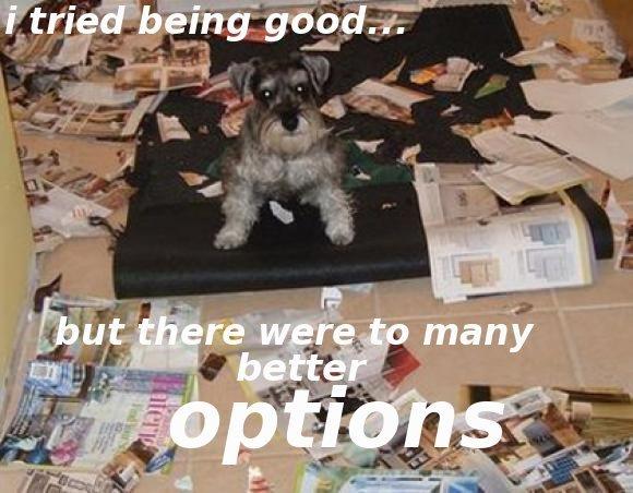 i tried to be good. i tried. dog tried to be