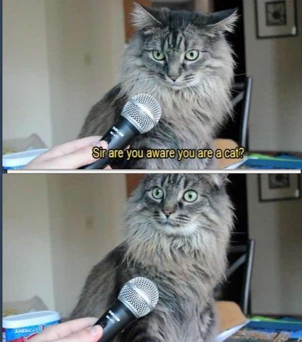 "I... what?. .. ""You're a cat!"" Wait... I... am cat ? Cats"