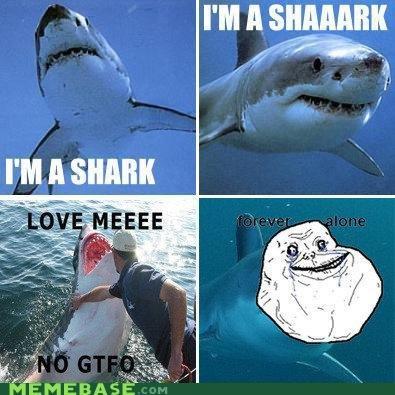 i'm a sharrk. memebase.com. Shark fuck yeah
