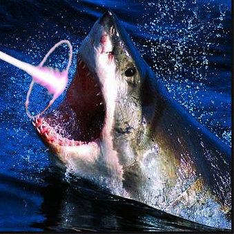 I MAH FIRIN MAH LAZOR 2.0. shark shootin a lazor. Shark lazor Laser