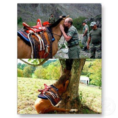 I feel so violated. .. Awwwww :( sad horse :( I feel so violated Awwwww :( sad horse