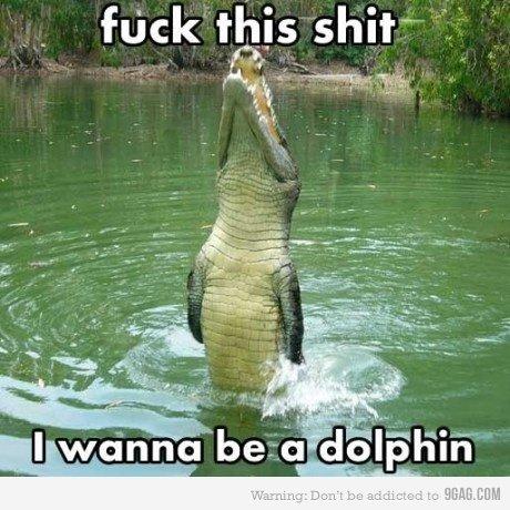 I wanna be a dolphin. Good choice 'gator, good choice.. wanna be Dolphin