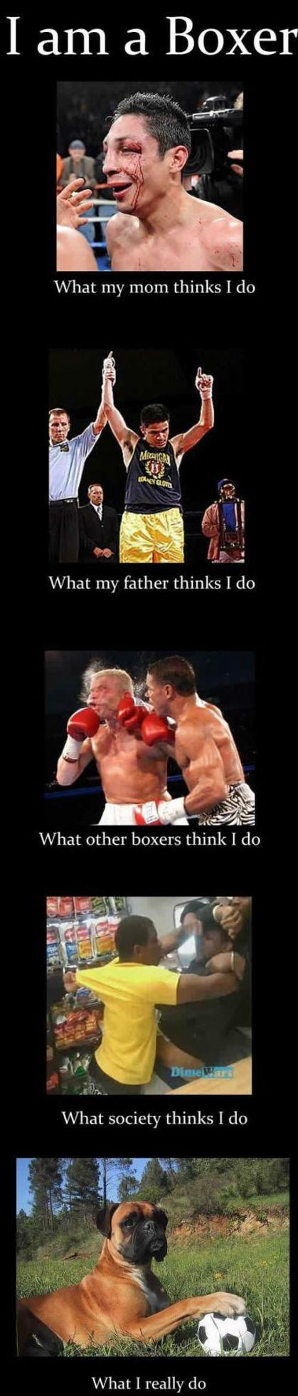 im a buxahh yeh?. gotcha bitchiz. I arn a Boxer What I really do im a buxahh yeh? gotcha bitchiz I arn Boxer What really do