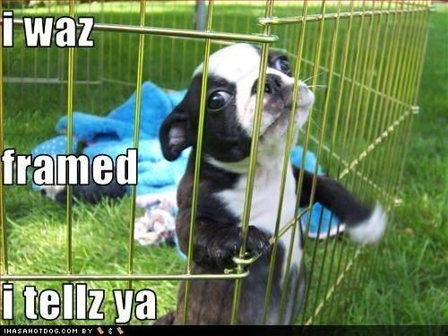 In the slammer. baby dog . In the slammer baby dog