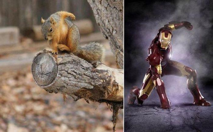 iron squirrel. . iron squirrel iron man