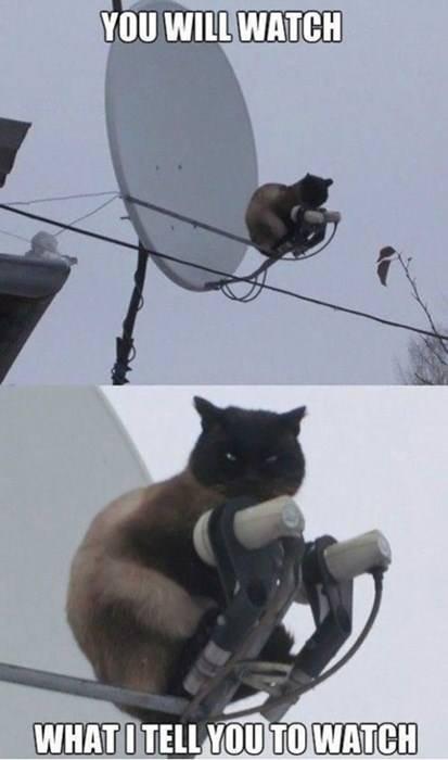 Master Cat. . Master Cat