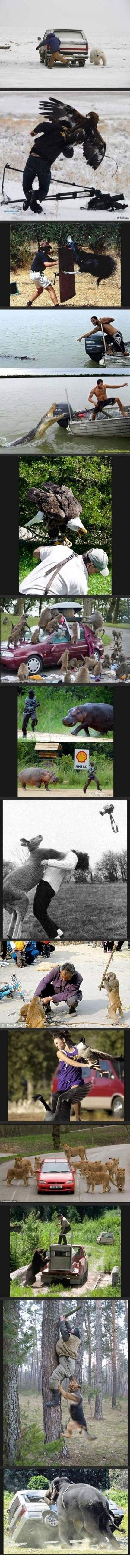Mean Animals. . Mean Animals