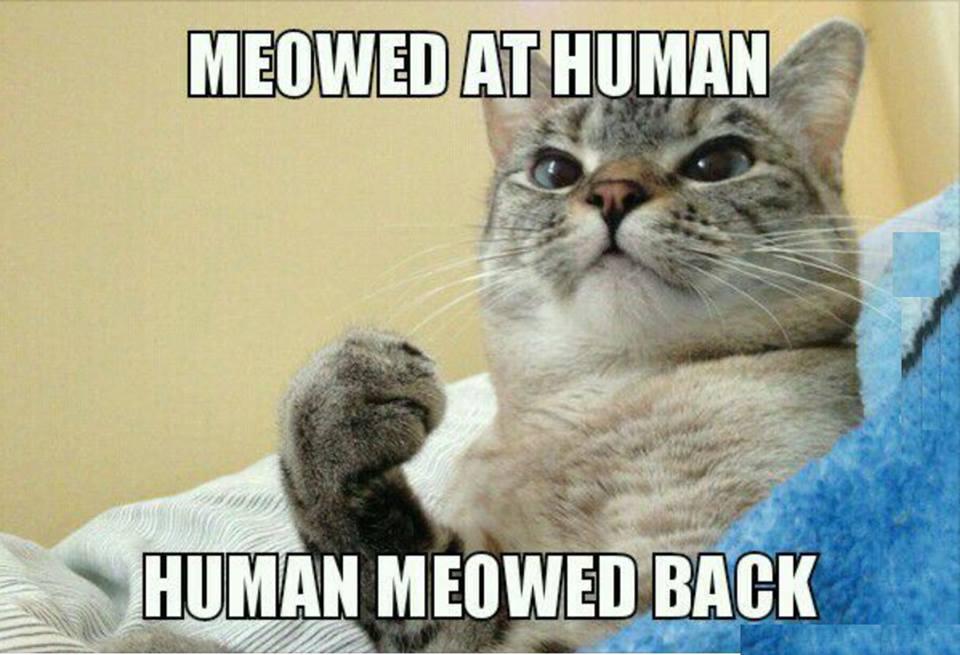 Meow. . Huh. Meow Huh