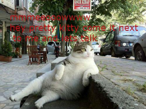 meoww. here kitty kitty.. k meoww here kitty k