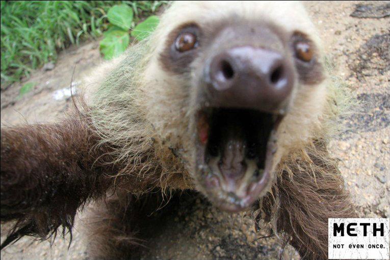 meth sloth. . meth sloth