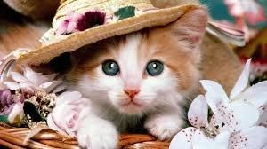 Miss kitty. . Miss kitty