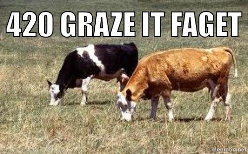 MMMOOOOOO. Found a funny.. graze Cow Grass