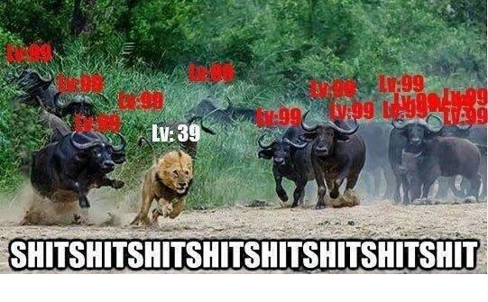 MMORPG's in a nutshell. . Fa: PG t iii' ii, MMORPG lvl Animals funny